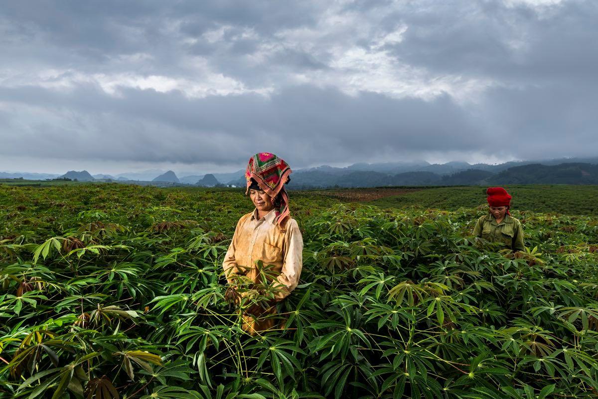 Women Farmers in Vietnam