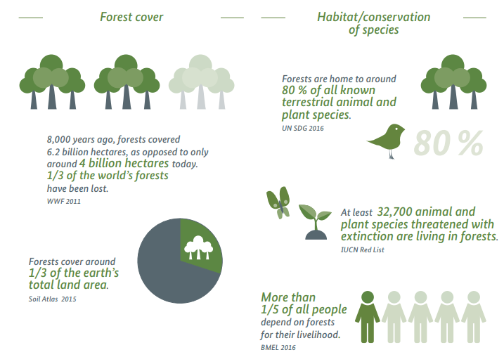 Some interesting facts about forests and habitats