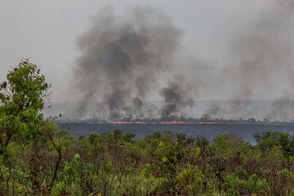 Huge fires destroy tropical ecosystems on one million hectares a year @ David Bebber/WWF-UK