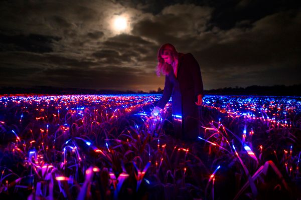 How Daan Roosegaarde's light art contributes to sustainable agriculture